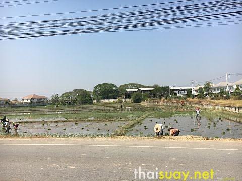 Тайские полуденные радости