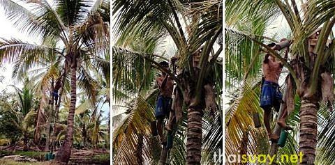Отбеливатель в кокосовом сахаре, и другие подробности о нем же
