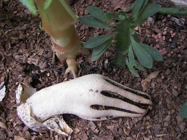 Вопросительно-ботаническое